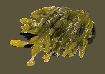 deep kelp pierdere în greutate