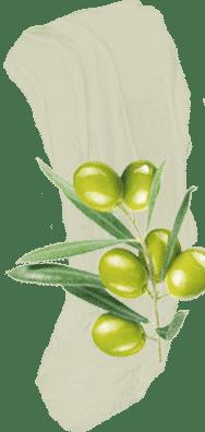 Virgin Olive
