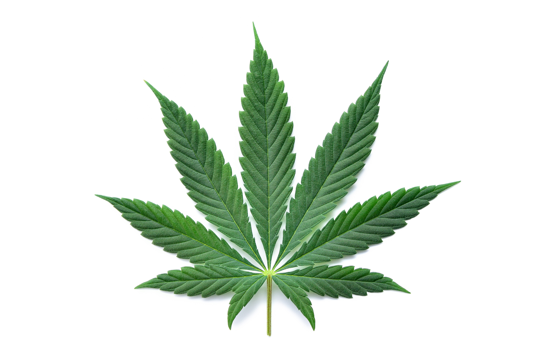 Lifes Priorities Food Weed Video Games Pot Marijuana Toke Long Sleeve Thermal